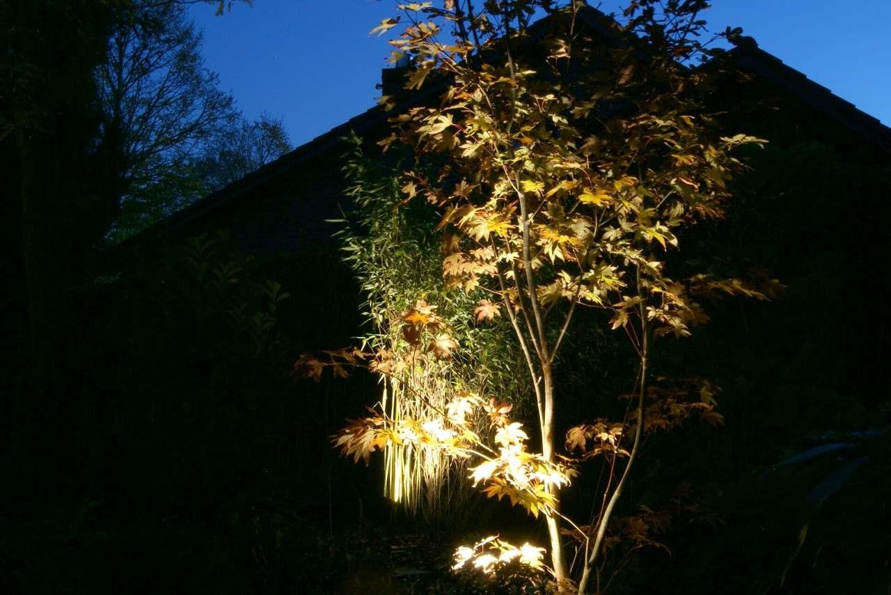 Licht im Garten 2