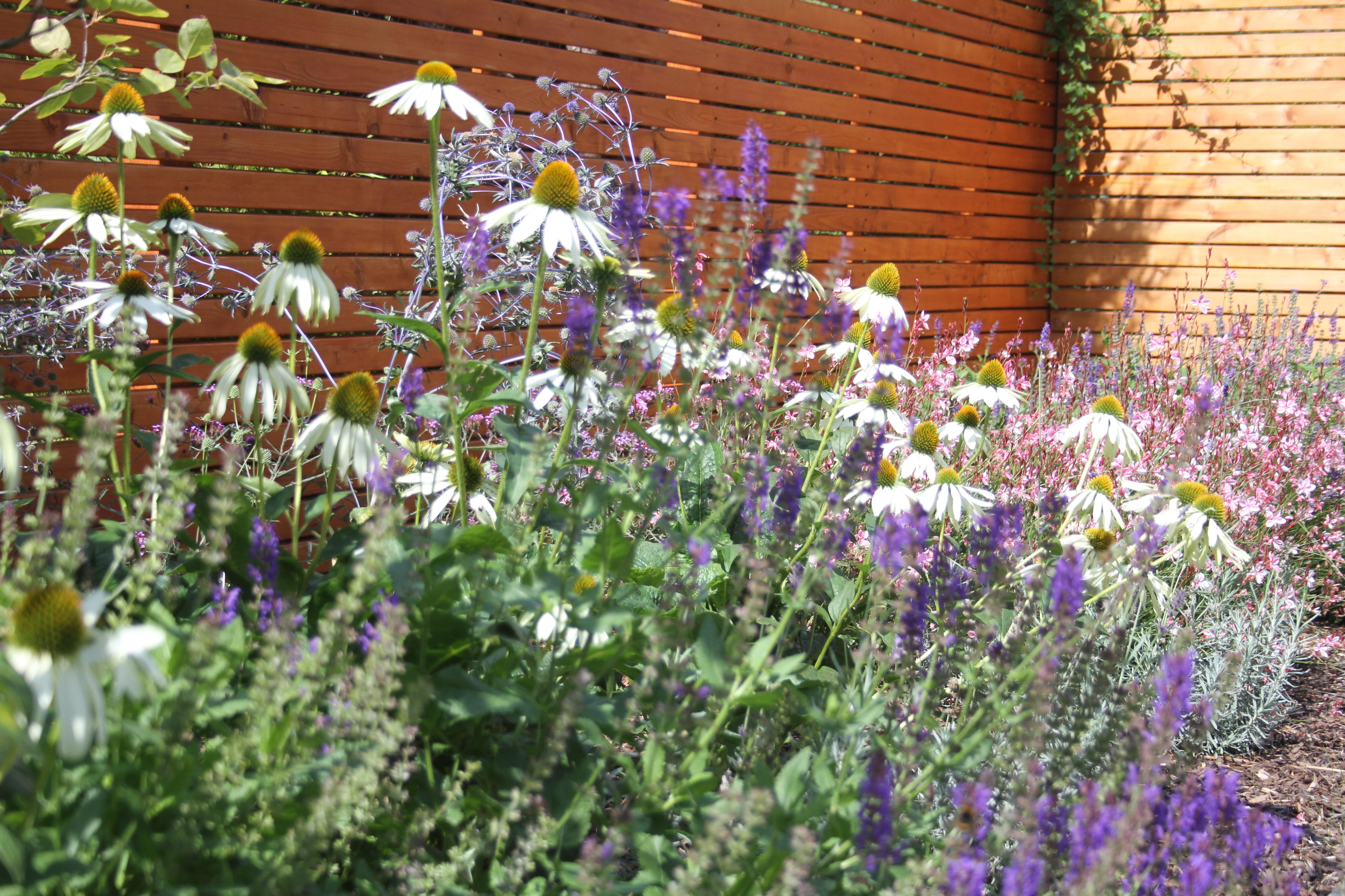 Gartenprojekt: Doppelhaushälfte in Aachen Brand